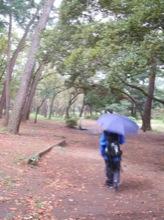 東海道をちょっと離れて千本松原に。マユミンは、カッパ&傘の完全装備。