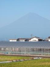 田んぼと富士山のコラボレーション。