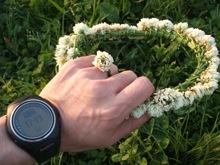 多摩川の河川敷に咲いていたクローバーの花で作った、花輪と指輪。歩くのを忘れて。。