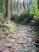 森の中を歩くのは、とても気持ちよい。