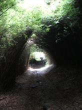 下り始めは、いきなりこんな感じの笹のトンネルが続く。ちょっと怖いよ。